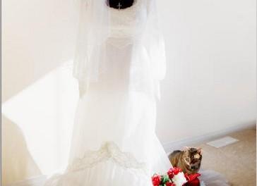 Wedding Cost Saving Ideas