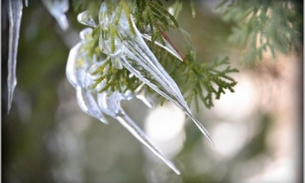Planning Your Winter Bridal Accessories